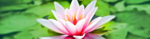 Conscious Care Circle - Blog